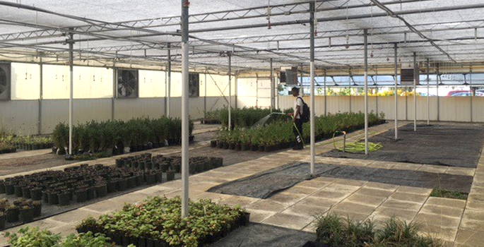 Student in a greenhouse